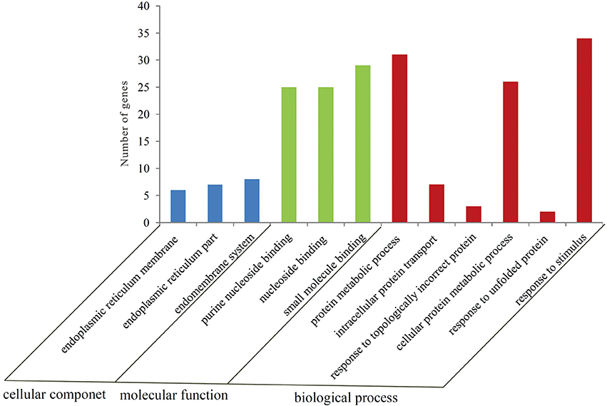 Frontiers | Characterization and Identification of