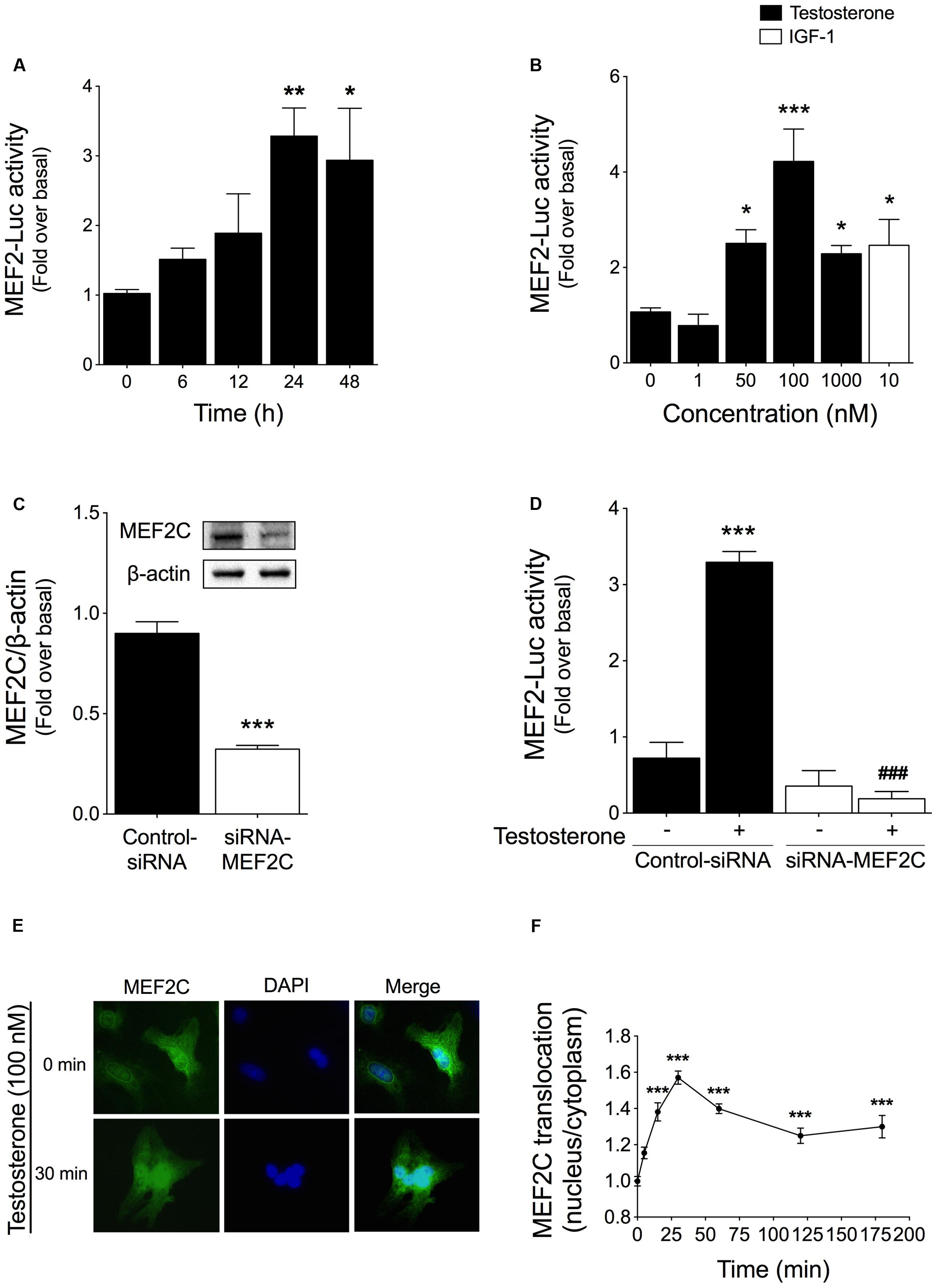Frontiers | Ca2+/Calmodulin-Dependent Protein Kinase II and Androgen