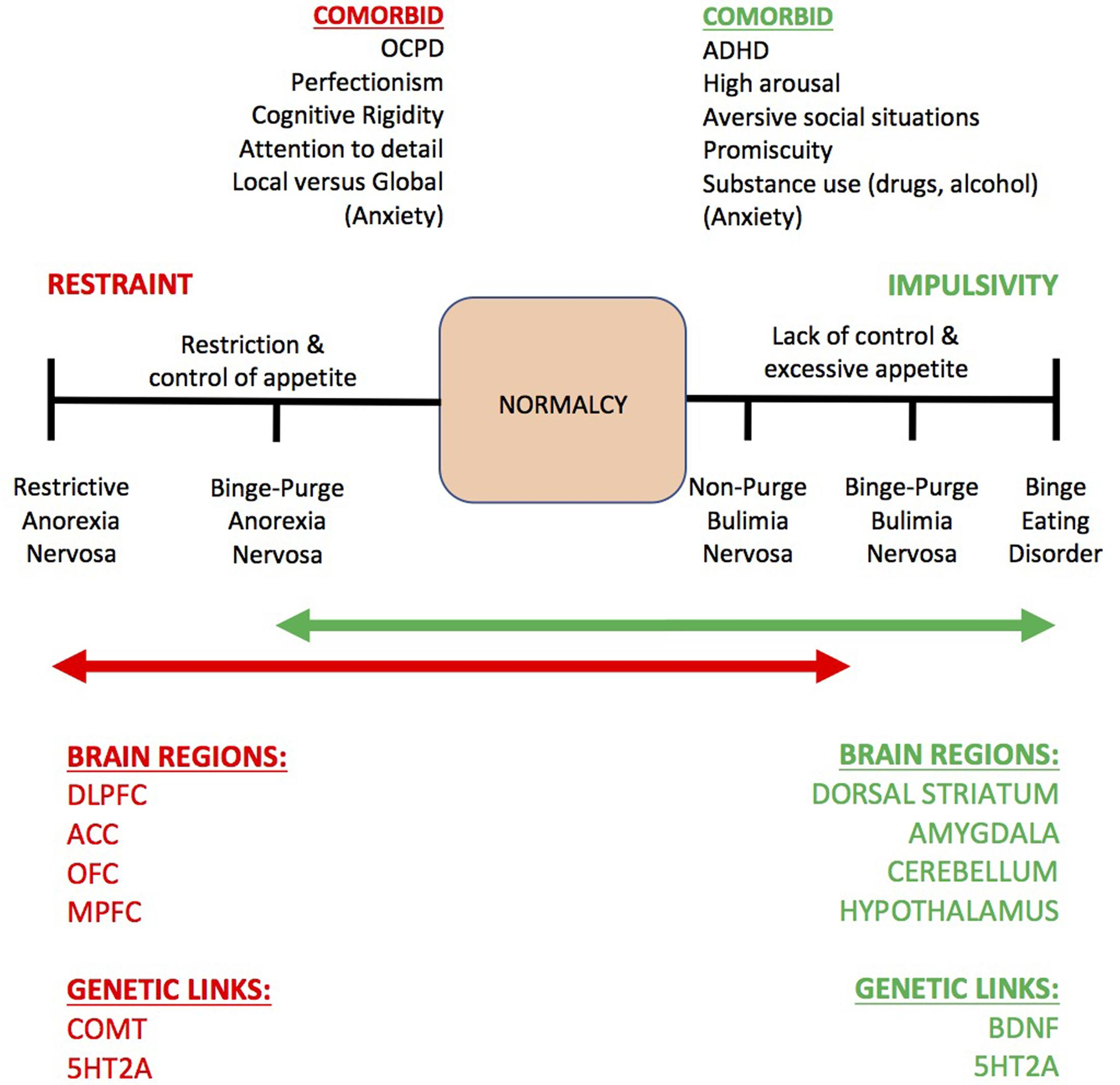Genetic Convergence Between Cognition >> Frontiers The Role Of Working Memory For Cognitive Control In