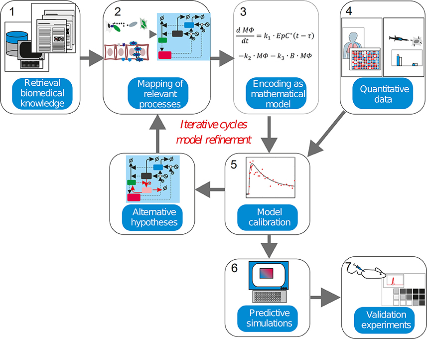 Validating a mathematical model