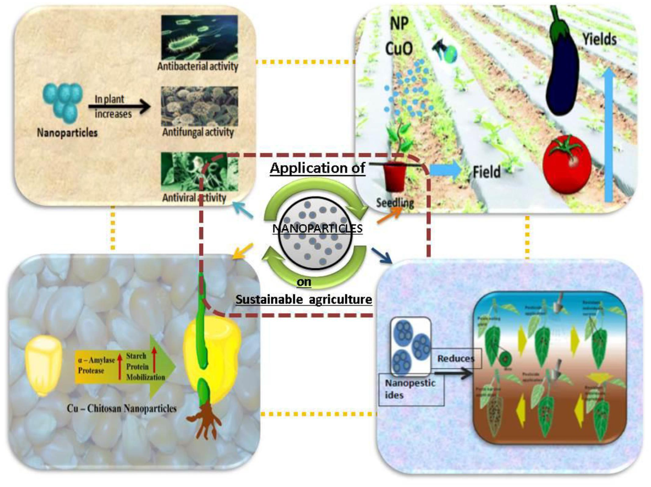 Frontiers | Nanotechnology in Sustainable Agriculture