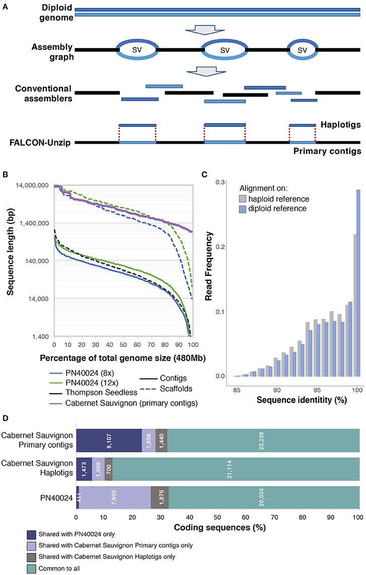 Frontiers   How Single Molecule Real-Time Sequencing and Haplotype