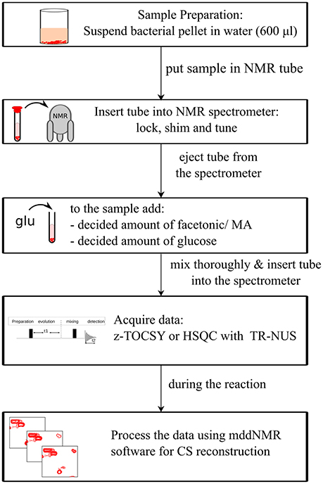 Frontiers | Fast 2D NMR Spectroscopy for In vivo Monitoring of