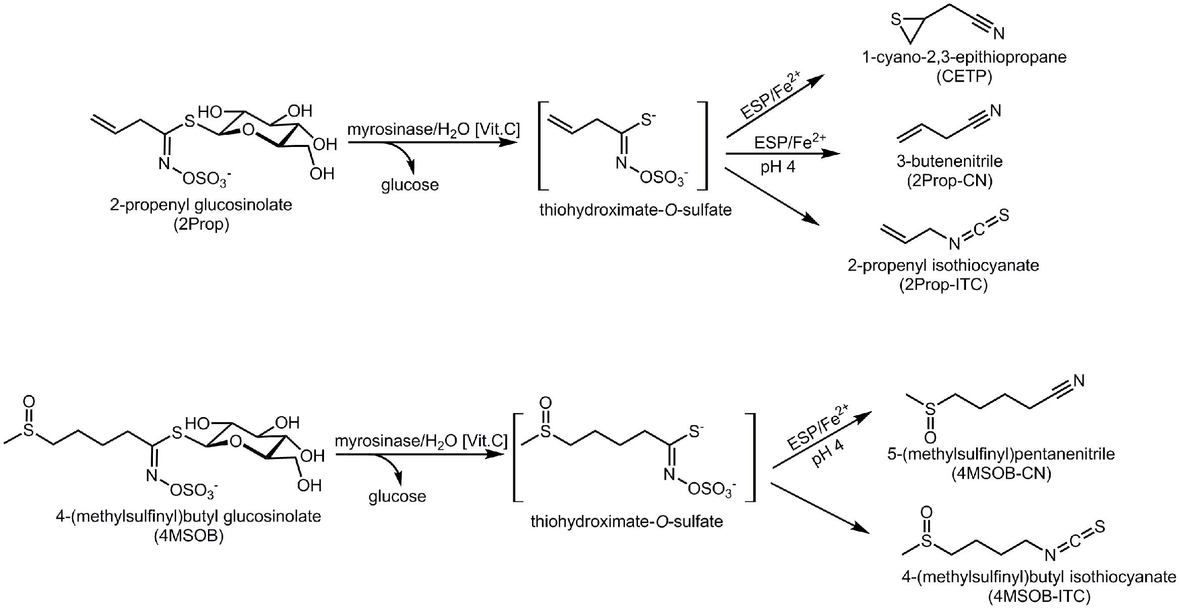 Frontiers | Isothiocyanates, Nitriles, and Epithionitriles