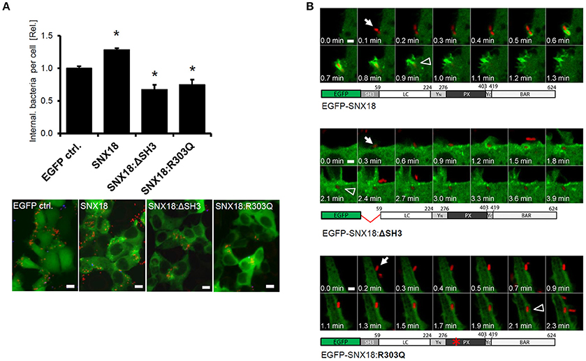 Frontiers | SopB-Mediated Recruitment of SNX18 Facilitates