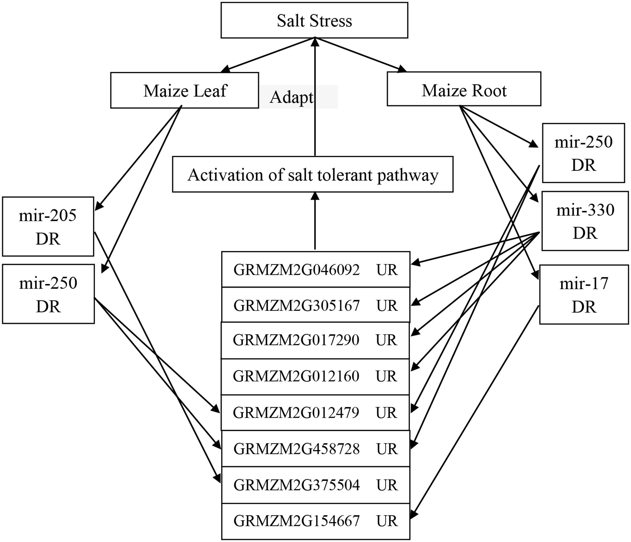 Frontiers identification of salt tolerance related micrornas and frontiersin pooptronica