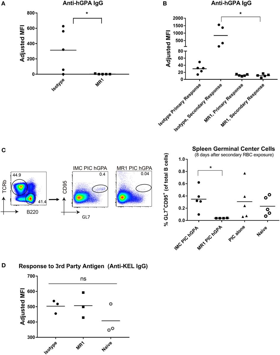 Frontiers | CD4 Depletion or CD40L Blockade Results in Antigen