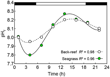 Frontiers | Coral Community Structure and Recruitment in Seagrass