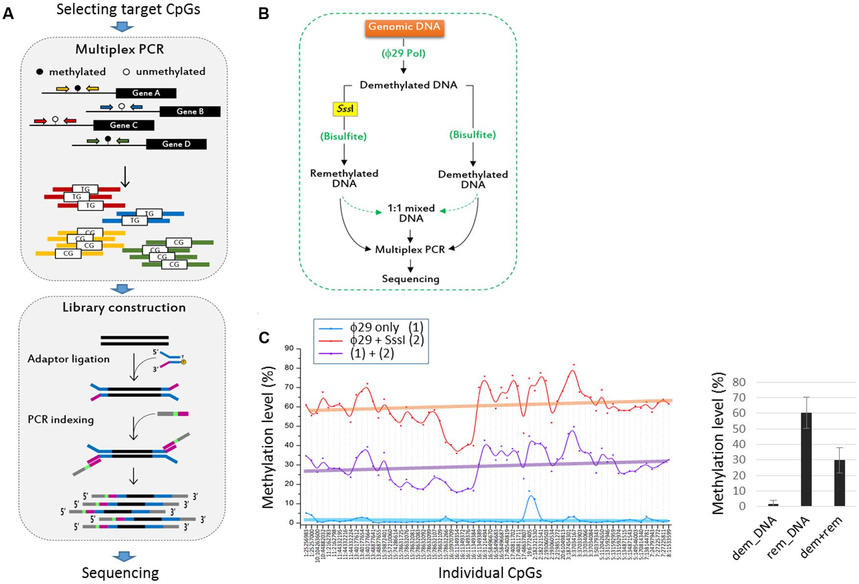 Frontiers | Simultaneous Methylation-Level Assessment of