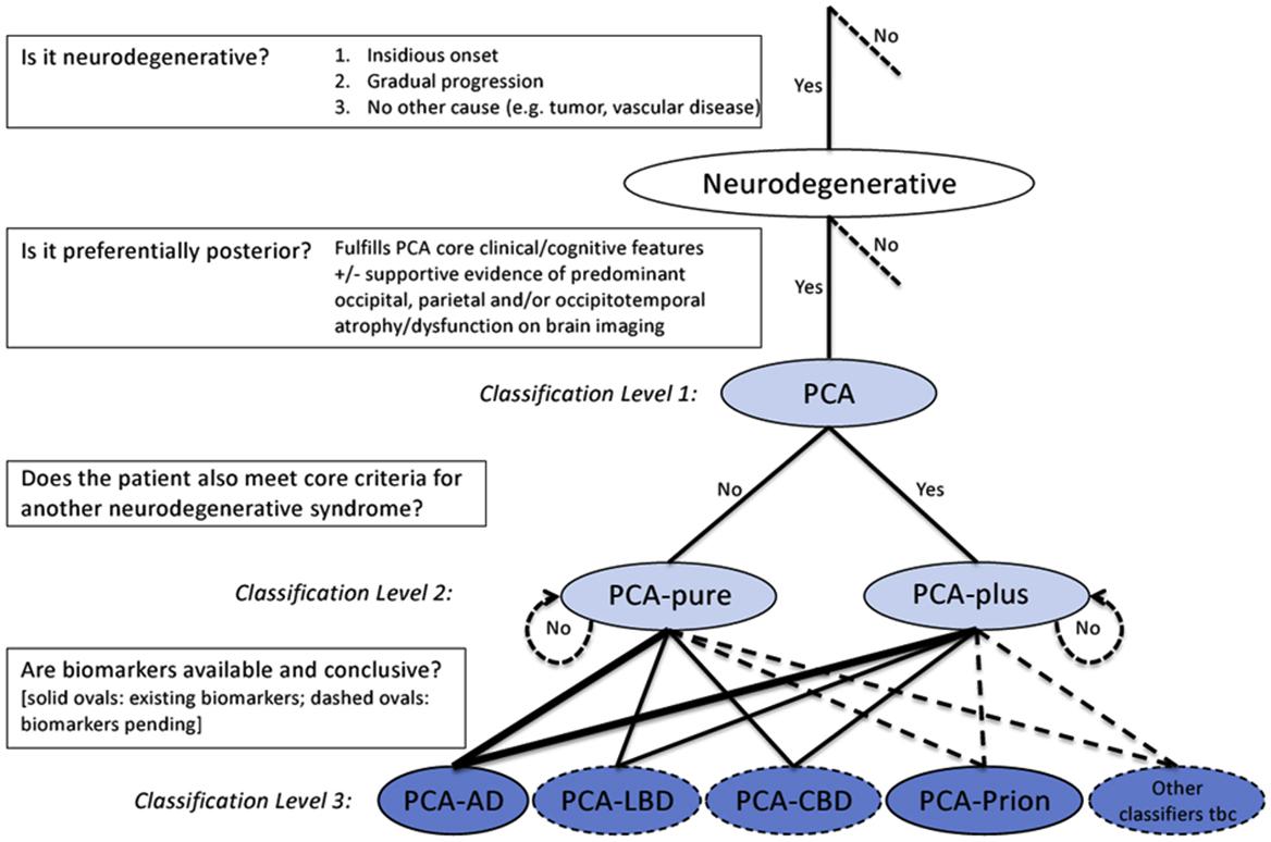 Nerve Impairment In Dog S Legs