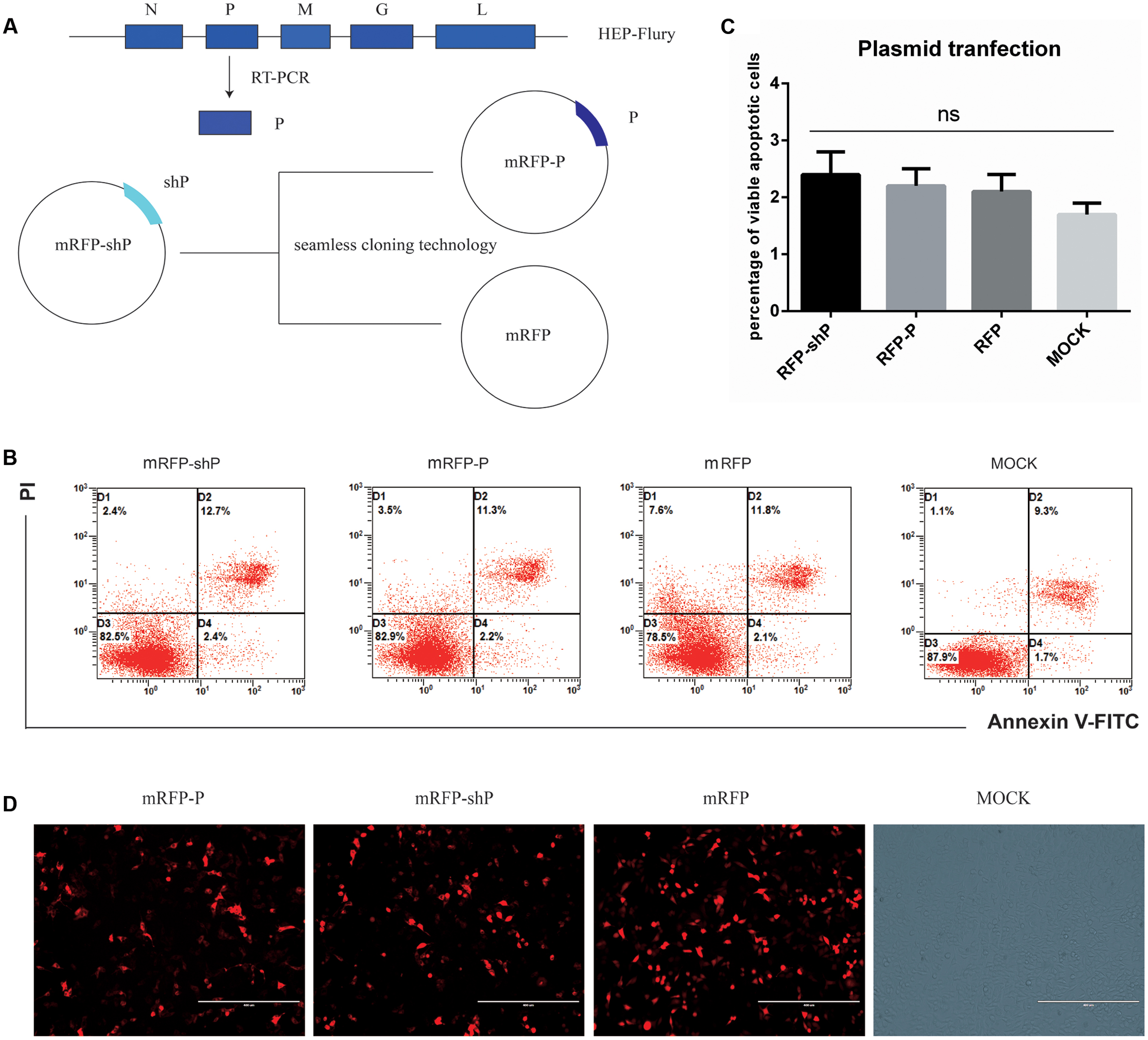 Frontiers phosphoprotein gene contributes to the enhanced frontiersin ccuart Gallery