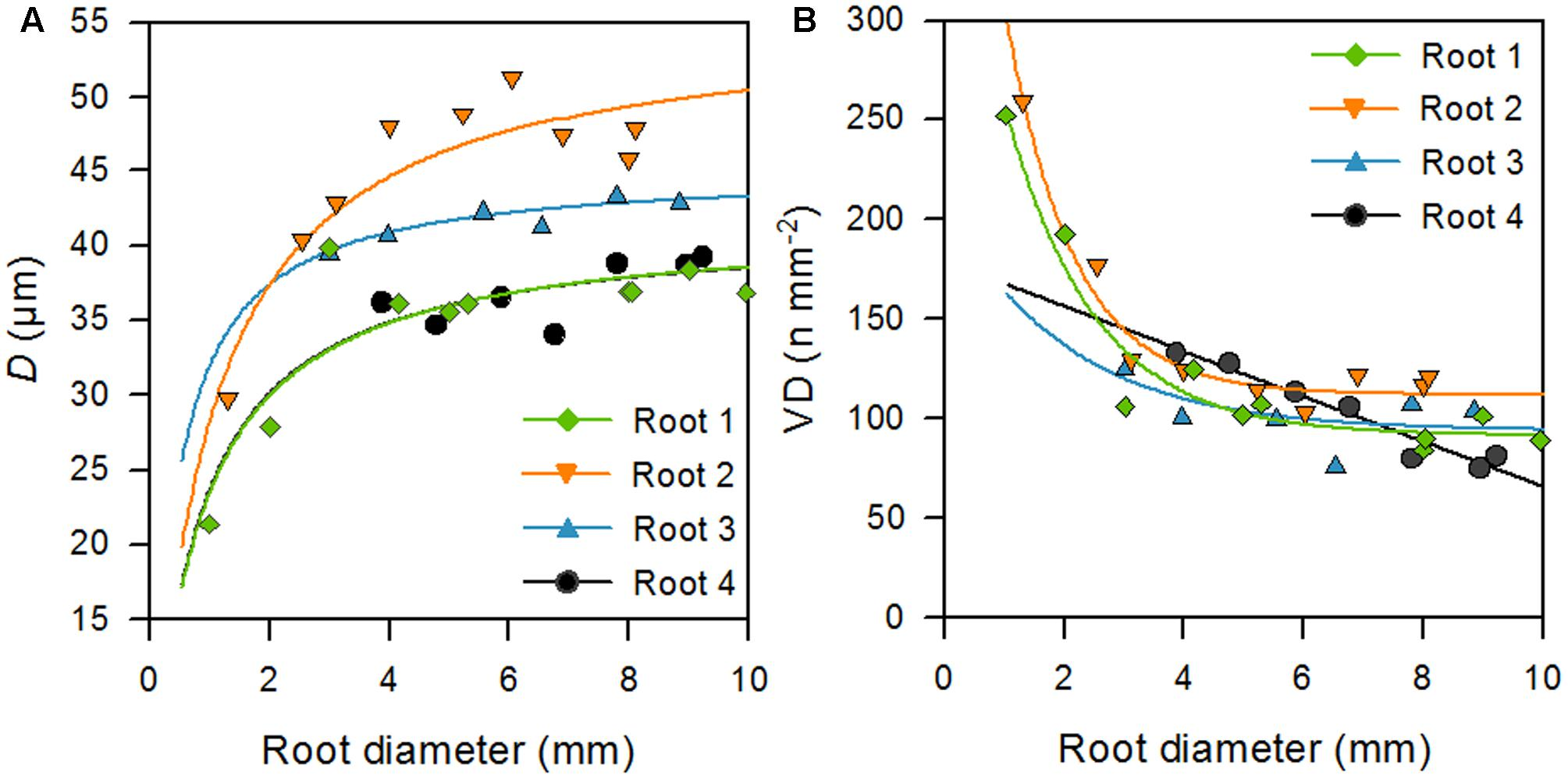 an analysis of the functions of the xylem vessel Which plant tissue functions as surface protection  vessel elements function  xylem arranged in geometric array.