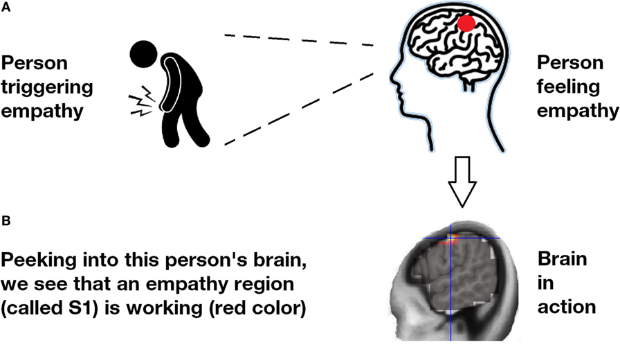 Figure 1 - Empathy inside the brain.