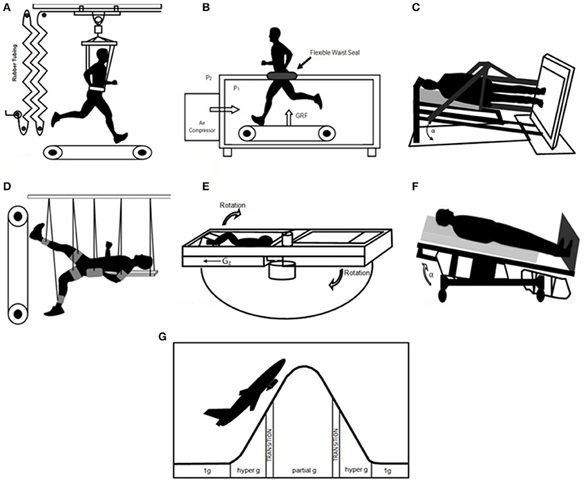 Frontiers   Human Biomechanical and Cardiopulmonary Responses to ...