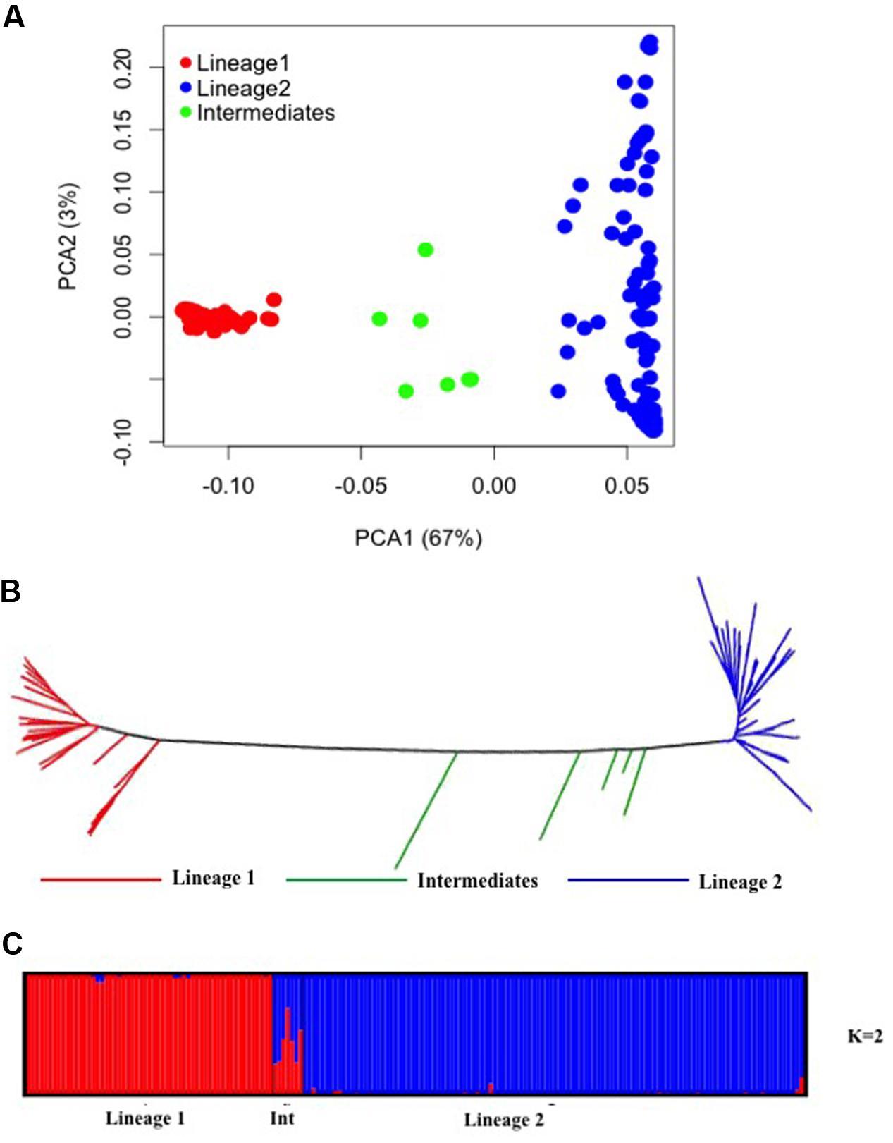 Frontiers | Genome-Wide Association Study of Grain