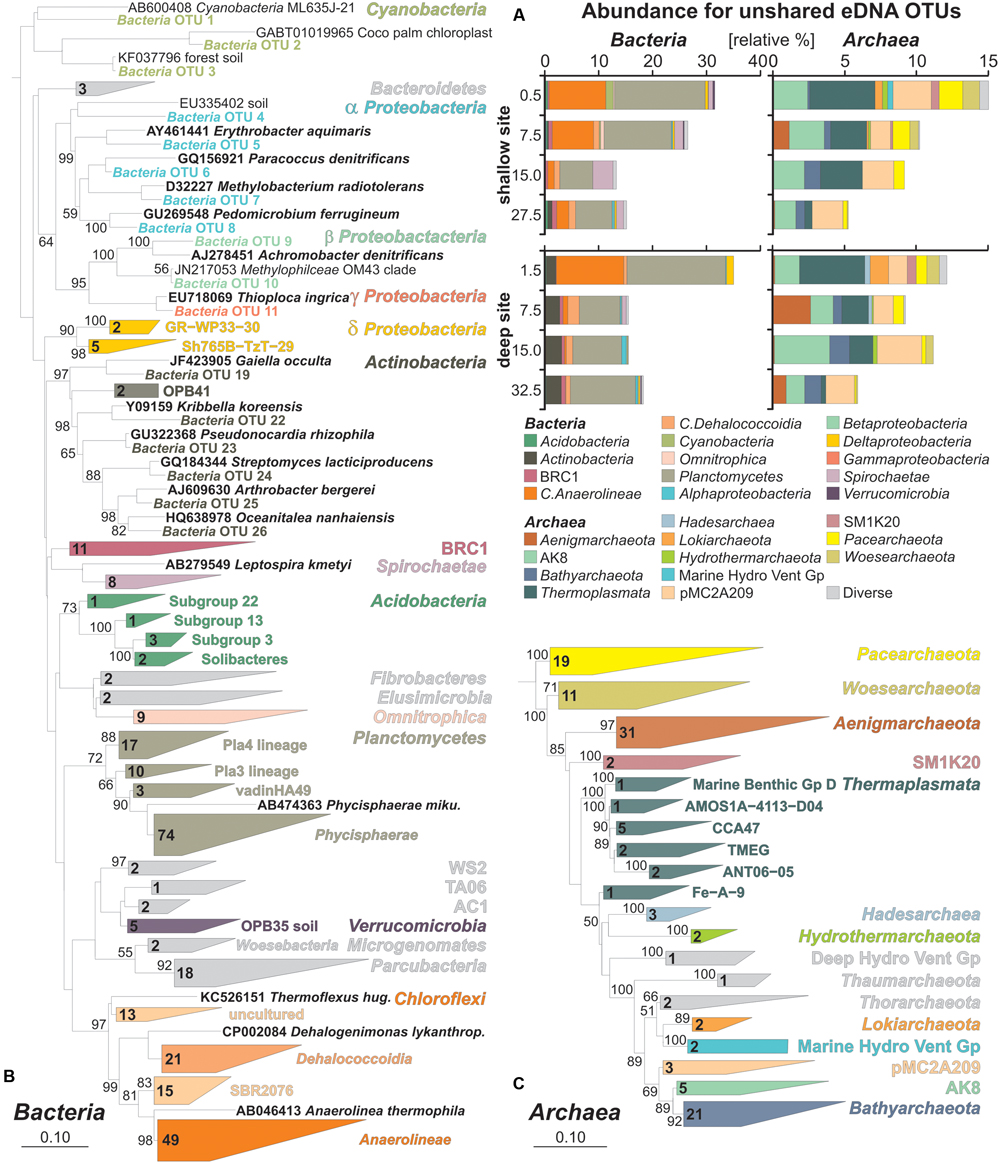 Frontiers | Preservation and Significance of Extracellular