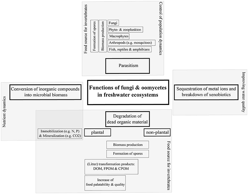 Frontiers | Aquatic Fungi: A Disregarded Trophic Level in