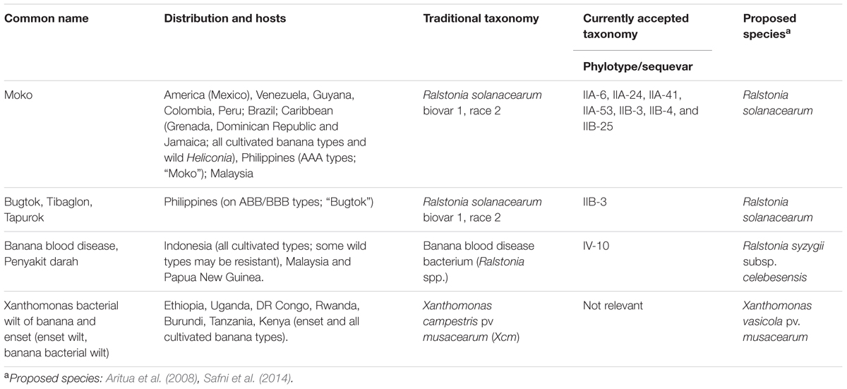Frontiers Bacterial Diseases Of Bananas And Enset Current State