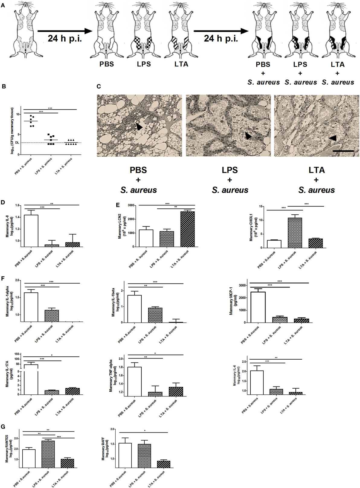Frontiers | Preconditioning with Lipopolysaccharide or Lipoteichoic ...