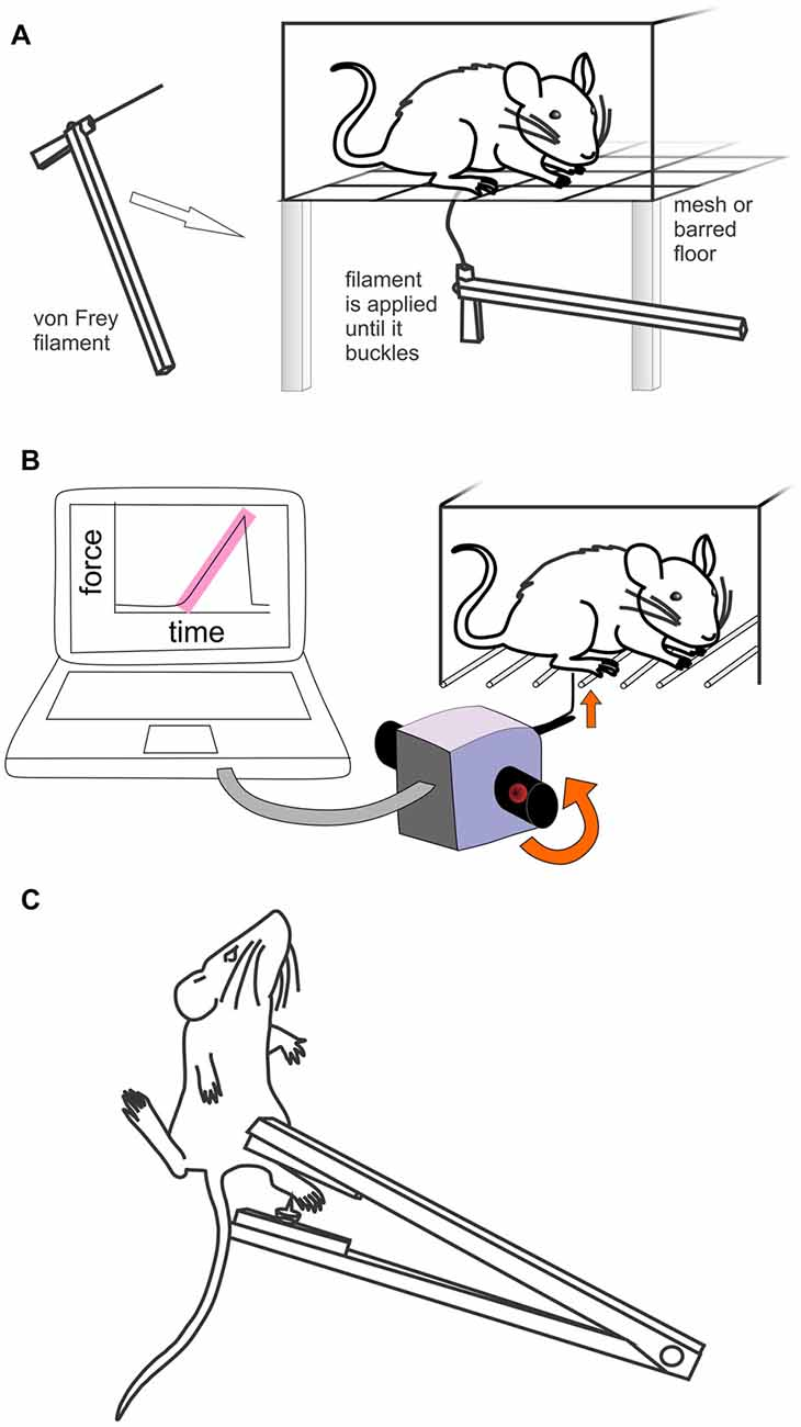 Frontiers | Methods Used to Evaluate Pain Behaviors in Rodents