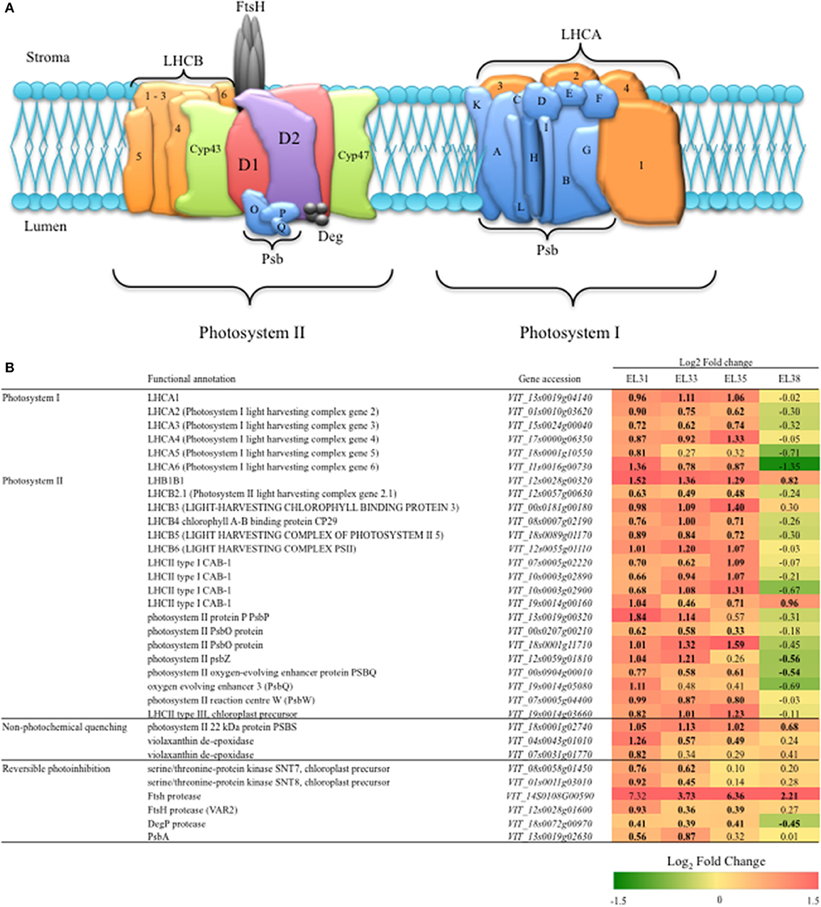 Frontiers | The Transcriptional Responses and Metabolic Consequences