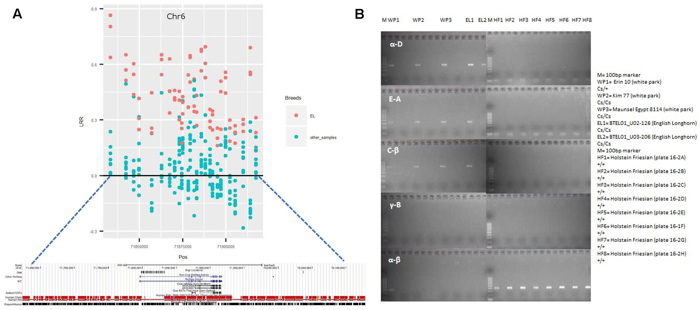 Frontiers | Distribution and Functionality of Copy Number Variation