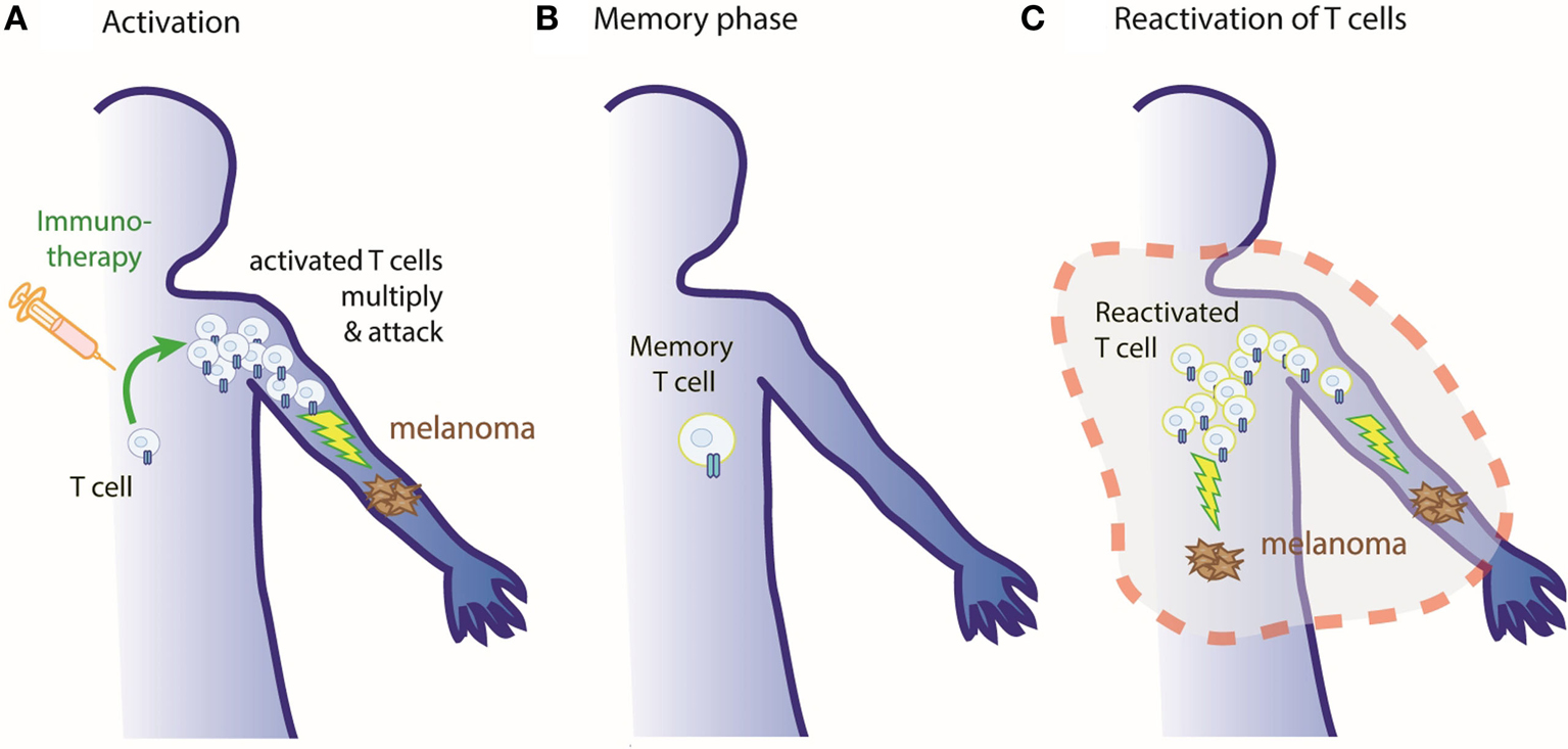 Figure 2 - Our immune system remembers!
