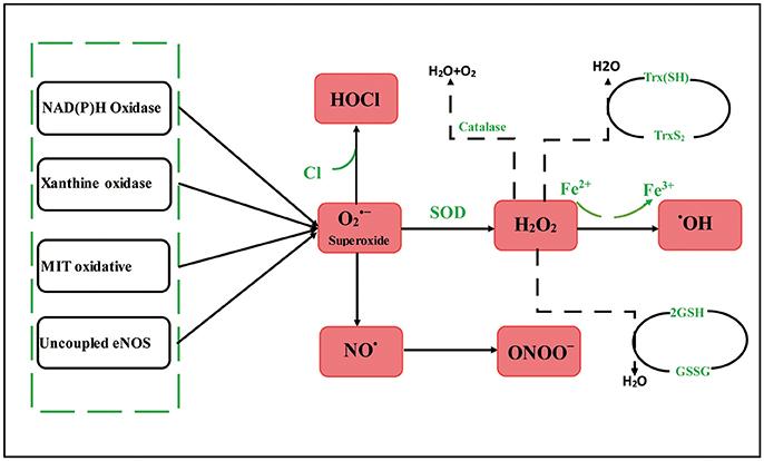 activated oxygen species