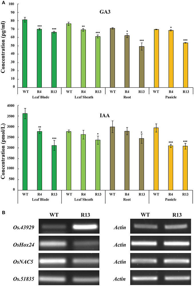 Frontiers   A LysM Domain-Containing Gene OsEMSA1 Involved in Embryo