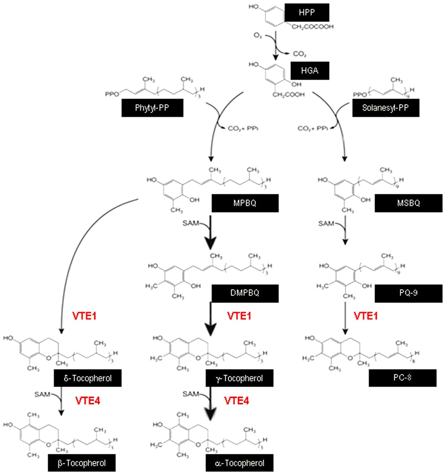 Frontiers Defense Related Transcriptional Reprogramming In Vitamin V F Method Block Diagram Figure 1 Schematic