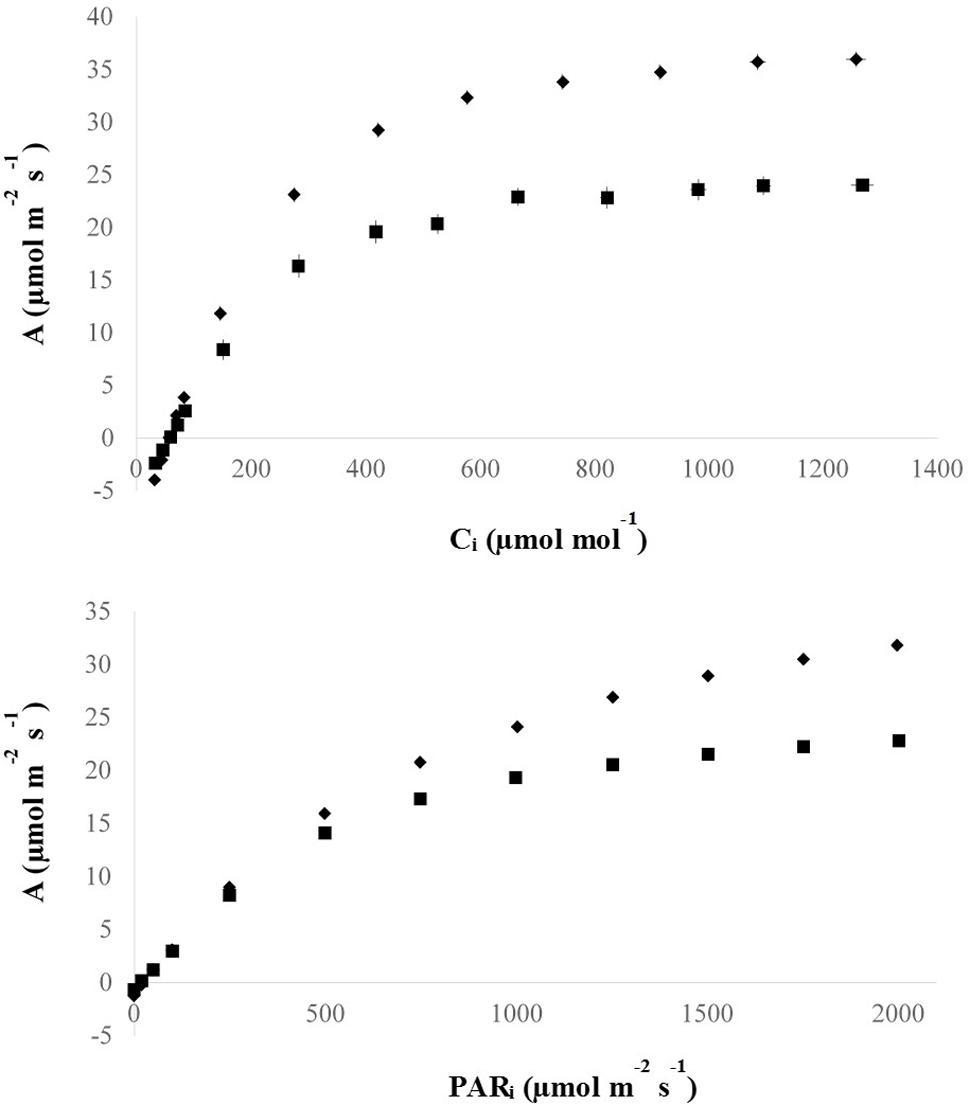 Frontiers   Increasing Leaf Vein Density via Mutagenesis in Rice
