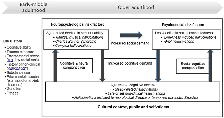 Frontiers | Hallucinations in Healthy Older Adults: An