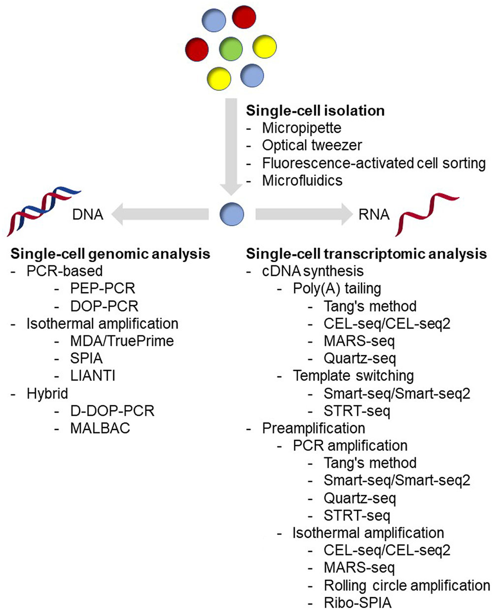 Frontiers tools for genomic and transcriptomic analysis of frontiersin falaconquin