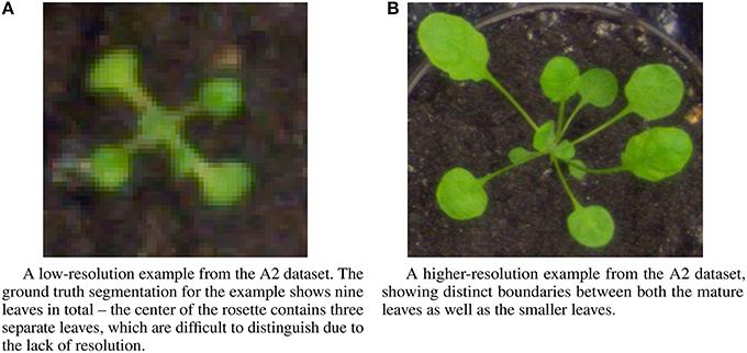 Frontiers | Deep Plant Phenomics: A Deep Learning Platform