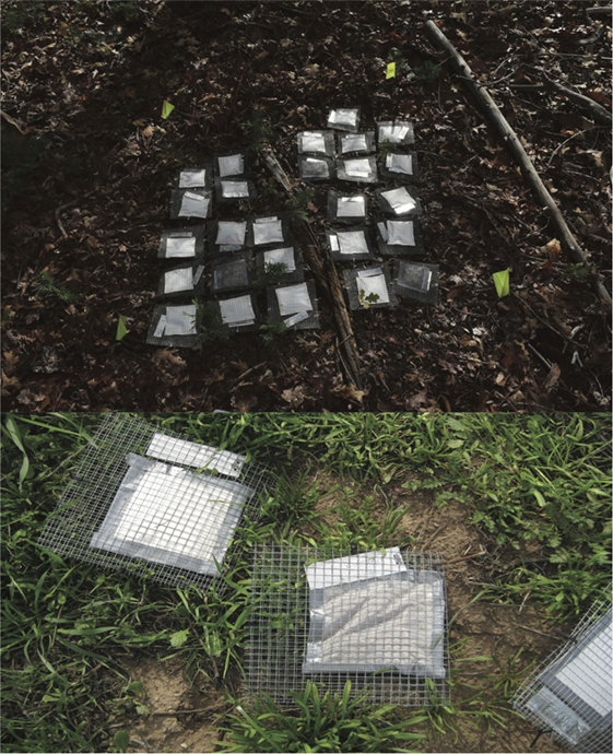 Figure 2 - Litterbags in the field at two different locations.