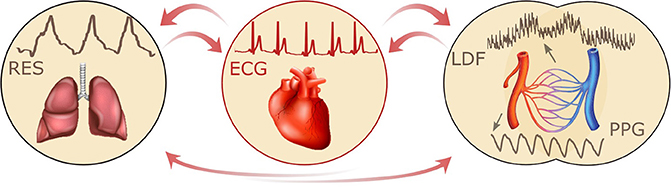 Frontiers | Coherence and Coupling Functions Reveal Microvascular