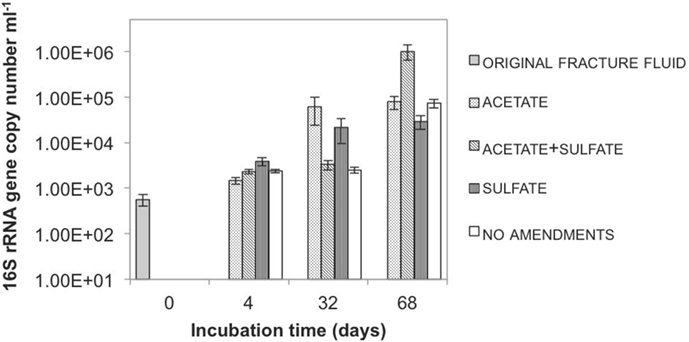 Figure 2 - Quantity of microbes in different microcosms during the incubation.
