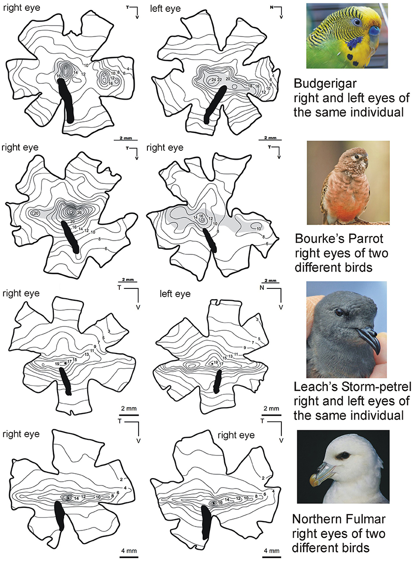 Frontiers What Drives Bird Vision Bill Control And