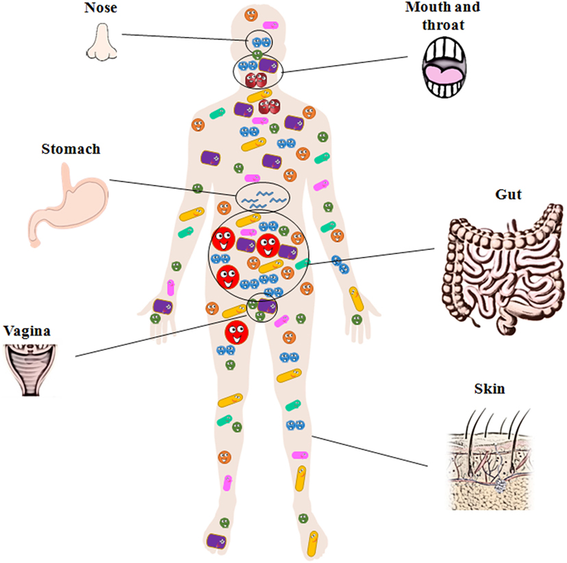 Figure 2 - The human body is the home of millions of bacteria.