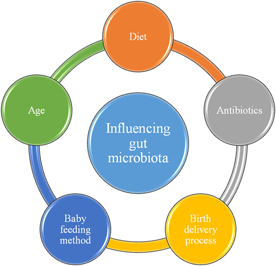 Figure 3 - Factors that influence our microbiota are showed in the small circles around the middle circle.