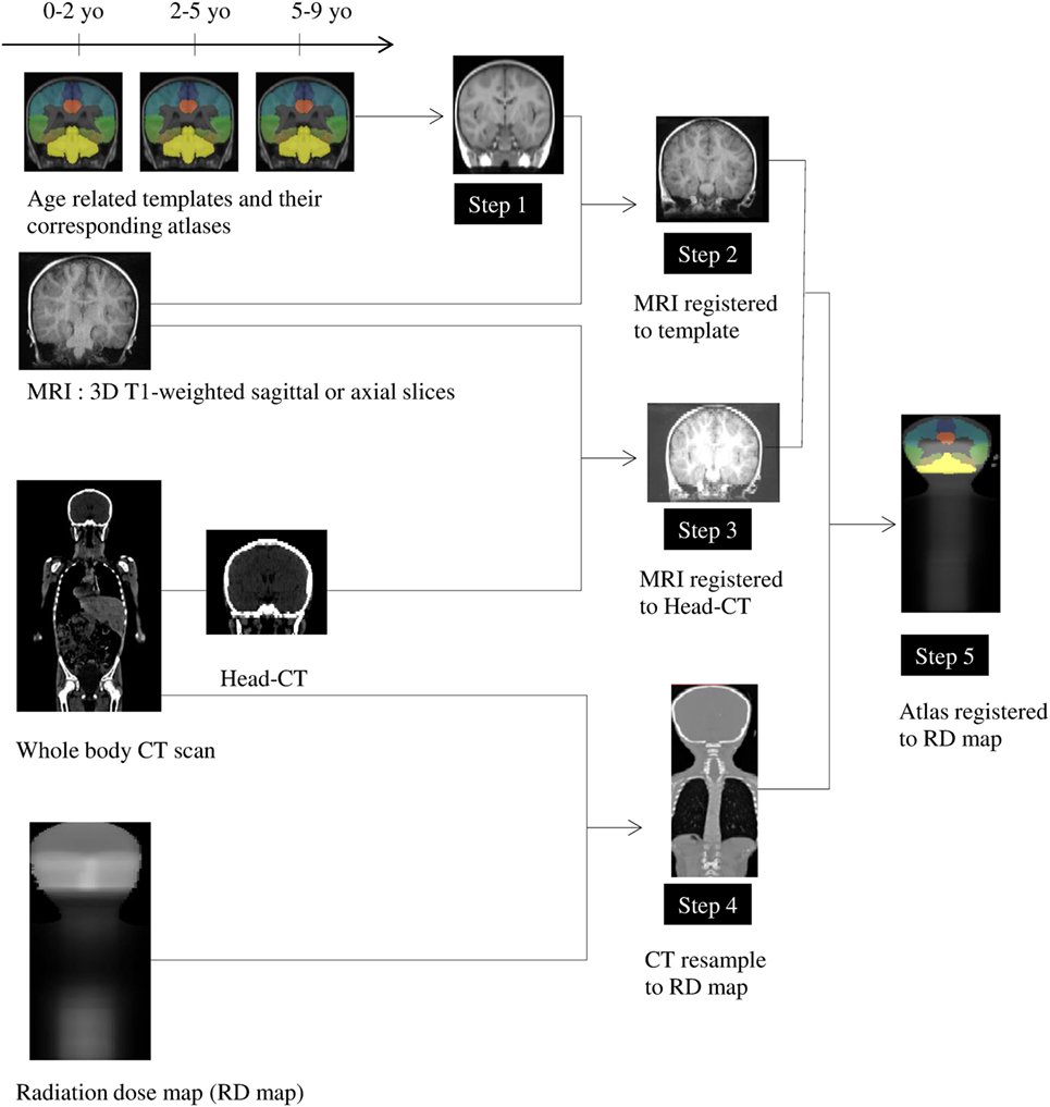 Frontiers Relationships Between Regional Radiation Doses And Electronic Device Circuit Jb Gupta