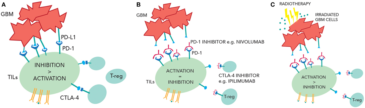 Frontiers | Current Advances in Checkpoint Inhibitors
