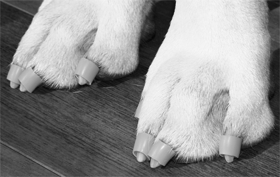 Frontiers Dr Buzby S Toegrips Application Results In Minimal