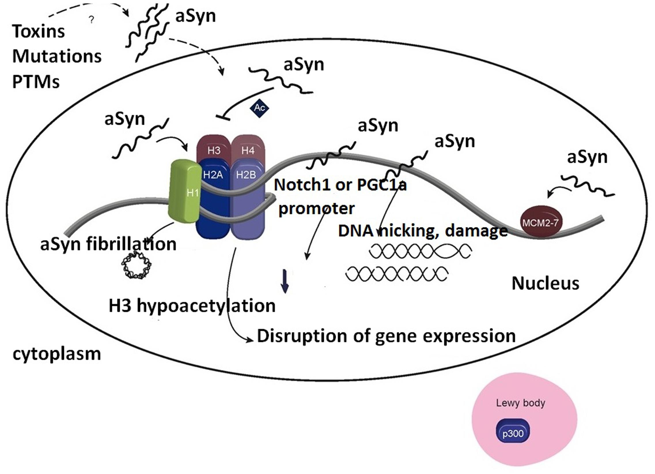 molecular approaches to gene expression and protein structure siddiqui m