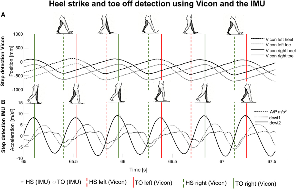 Frontiers   Validation of a Step Detection Algorithm during