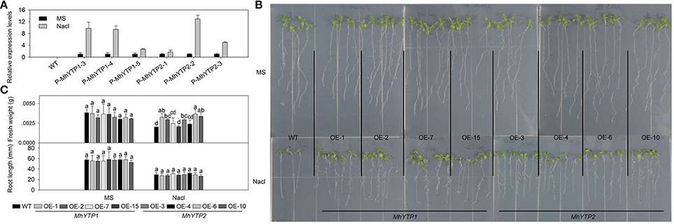 transgenic plants for enhanced biodegradation and 2005 progress report: transgenic plants for bioremediation of transgenic plants for bioremediation of bioengineering, biodegradation, transgenic plants.
