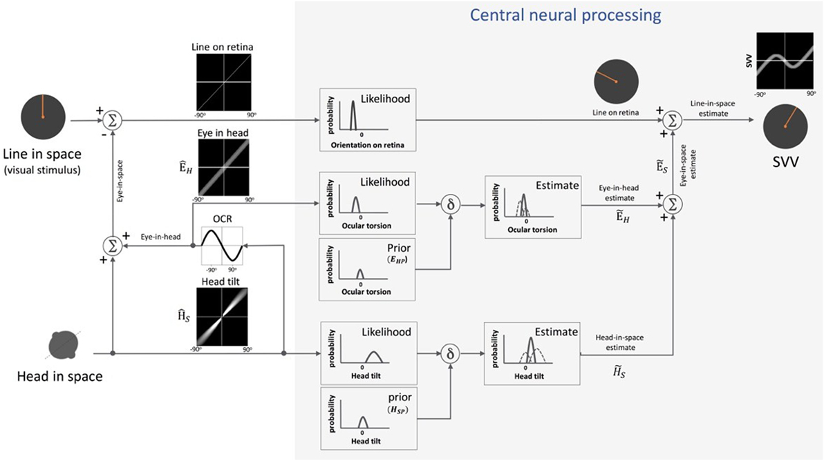 Frontiers | Perception of Upright: Multisensory Convergence