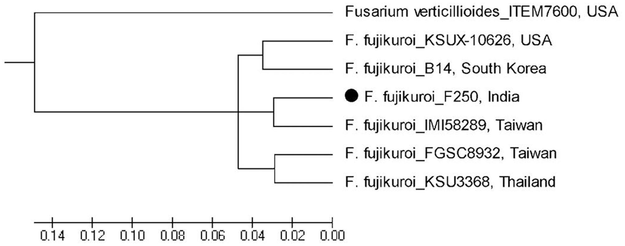Frontiers Whole Genome Sequencing Of Fusarium Fujikuroi Provides Potato Gun Diagram