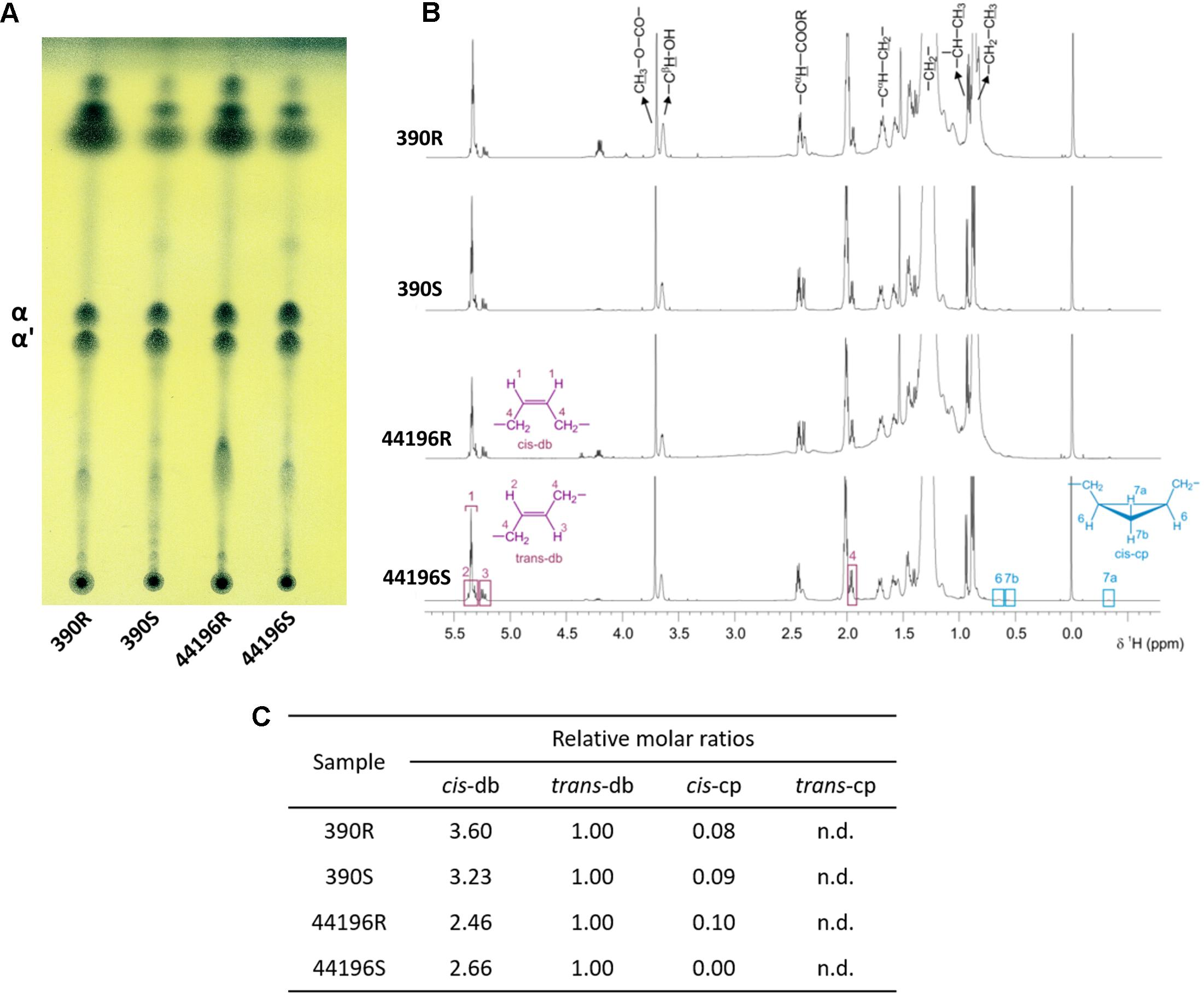 Frontiers trehalose polyphleates external cell wall lipids in frontiersin fandeluxe Image collections