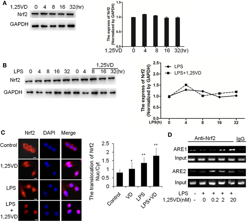 1,25-Dihydroxyvitamin D Inhibits LPS-Induced